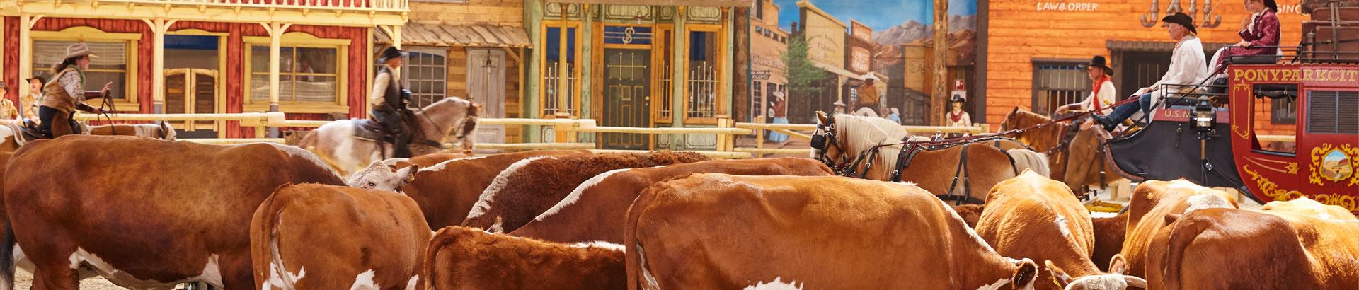 Cowboyshow2