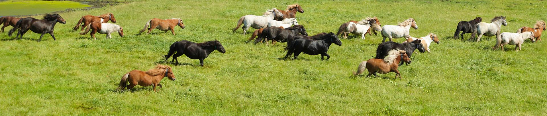 Ponys2goed