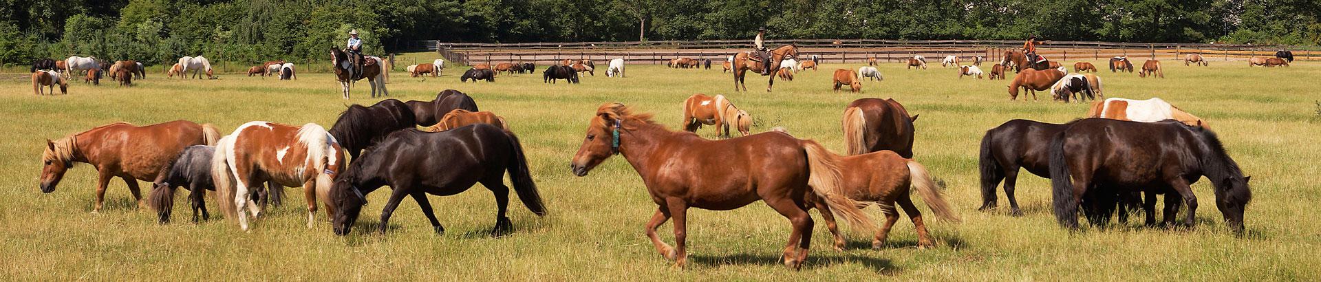 Ponysgoed