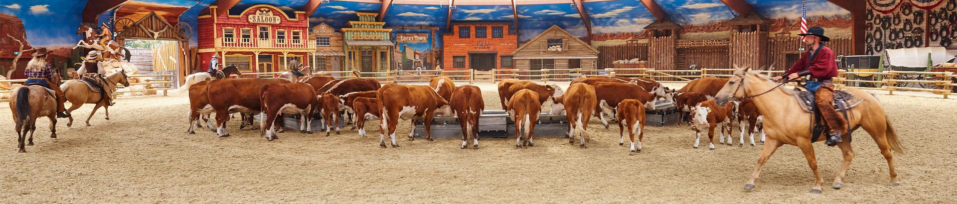 cowboyshow4