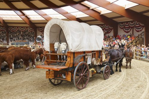 Ponys show
