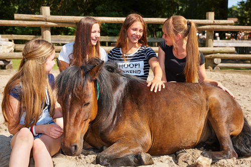 Pony reserveren1