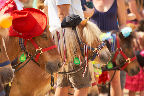 Ponywedstrijd
